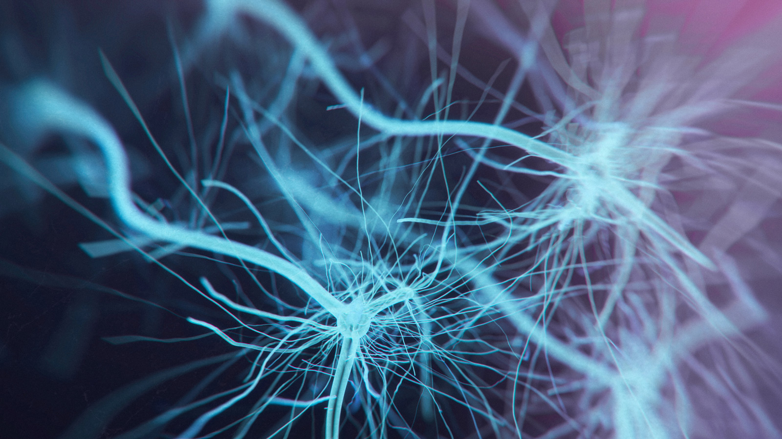 a blue and purple image of neurons